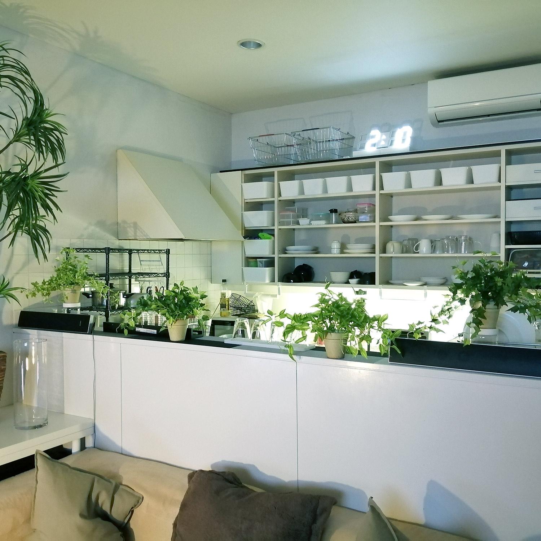 光触媒フェイクグリーン 造花 観葉植物 鉢植え 4点セット 6980円